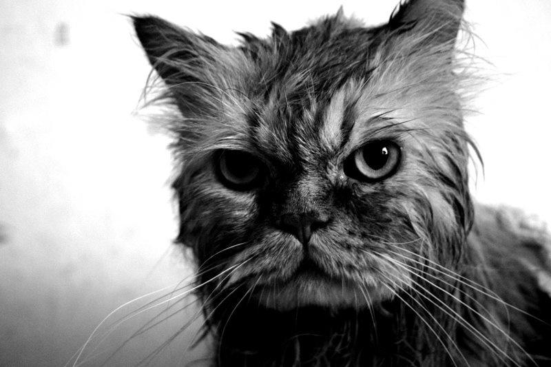 wet pussy мокра кицька