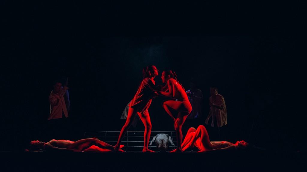 Вистава Олексія Коломійцева — «Вівісекція»